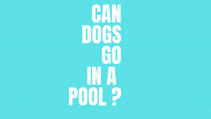 Can dogs go in a pool